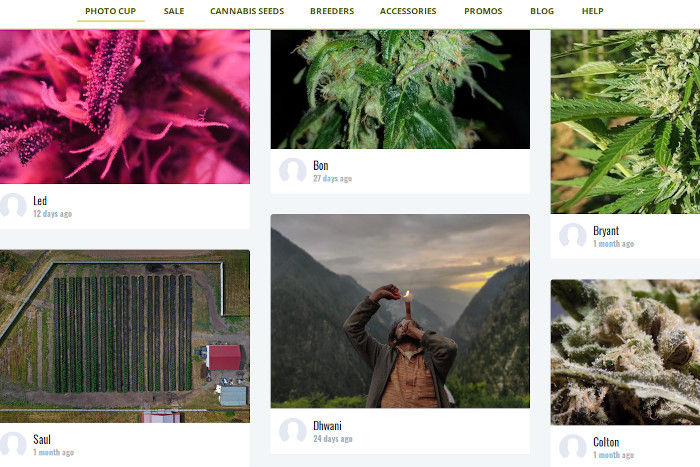 cannabis photo competition