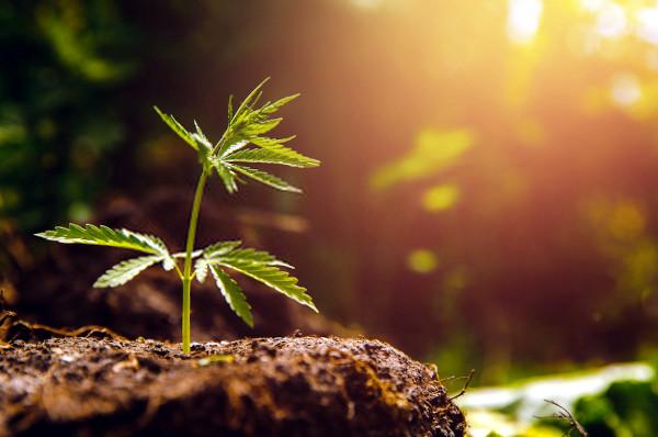 finding a grow spot for marijuana cultivation