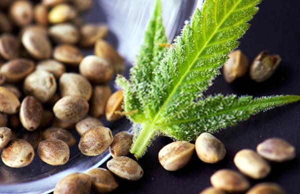 marijuana seeds for growing