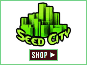 Seed City Link